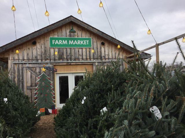 2 Columbus Christmas Tree Farms Family Photos Christmas Tree Farm Tree Farms Christmas Tree
