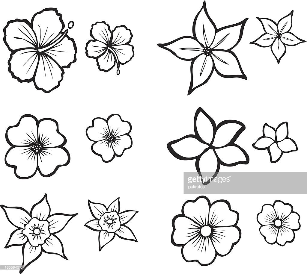 Illustrations Of Six Tropical Flowers Also Available In Full Color Flower Drawing Tropical Flower Tattoos Flower Sketches
