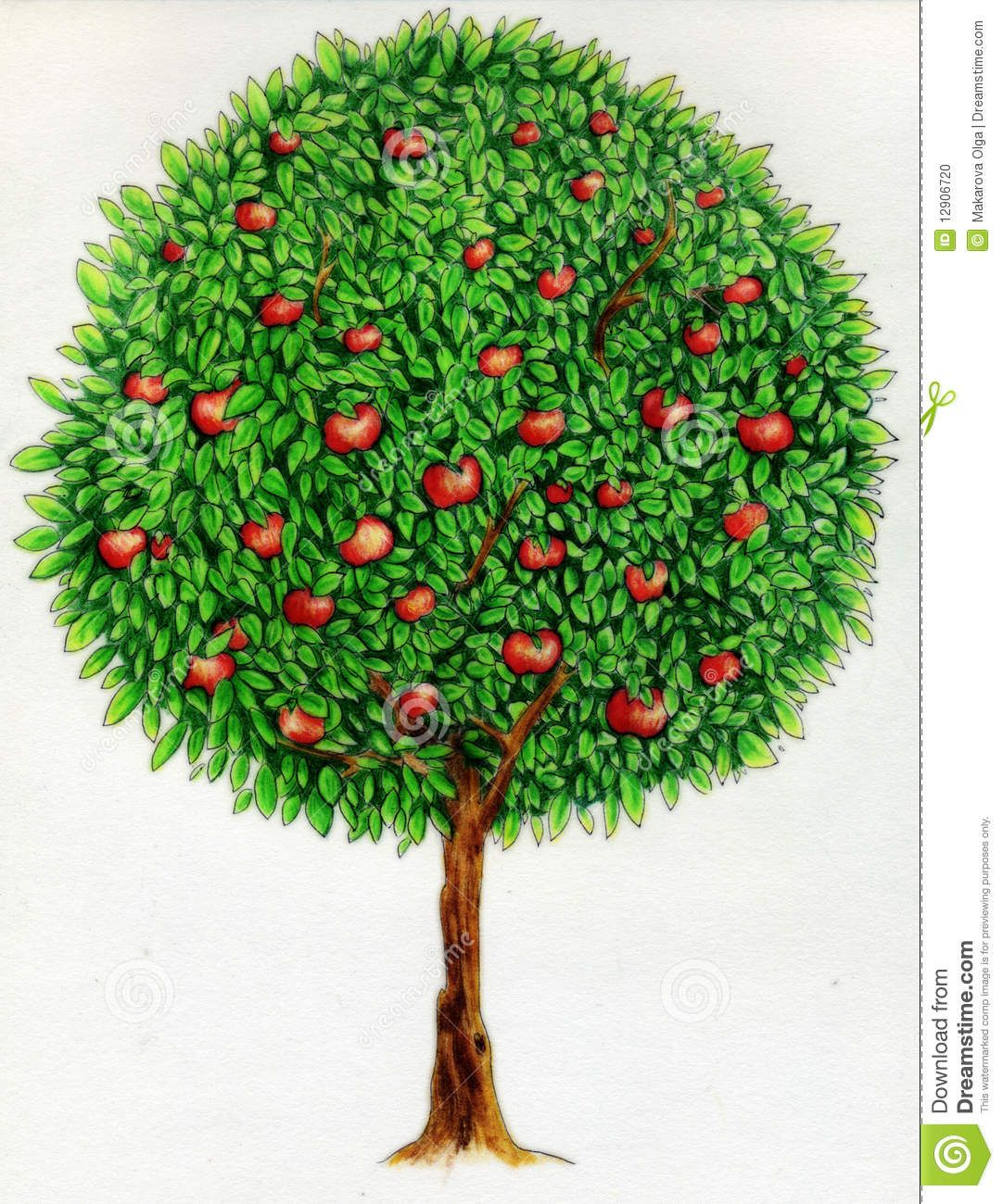 Pencil Drawings Trees | Crayon (colored pencil) drawing of an apple ...