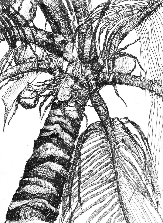 Tree - Coloring Pages & Pictures - IMAGIXS | Graphics | Pinterest ...