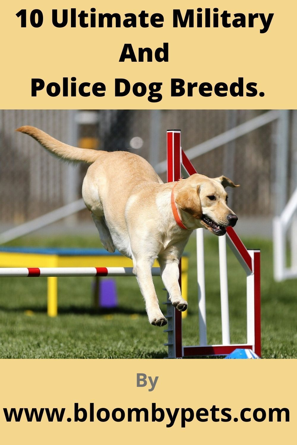 10 Ultimate Military And Police Dog Breeds Police Dog Breeds Dogs Dog Breeds