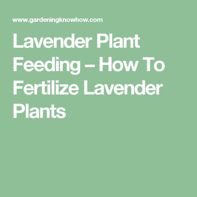 Fertilizer For Lavender When To Feed Lavender In Gardens