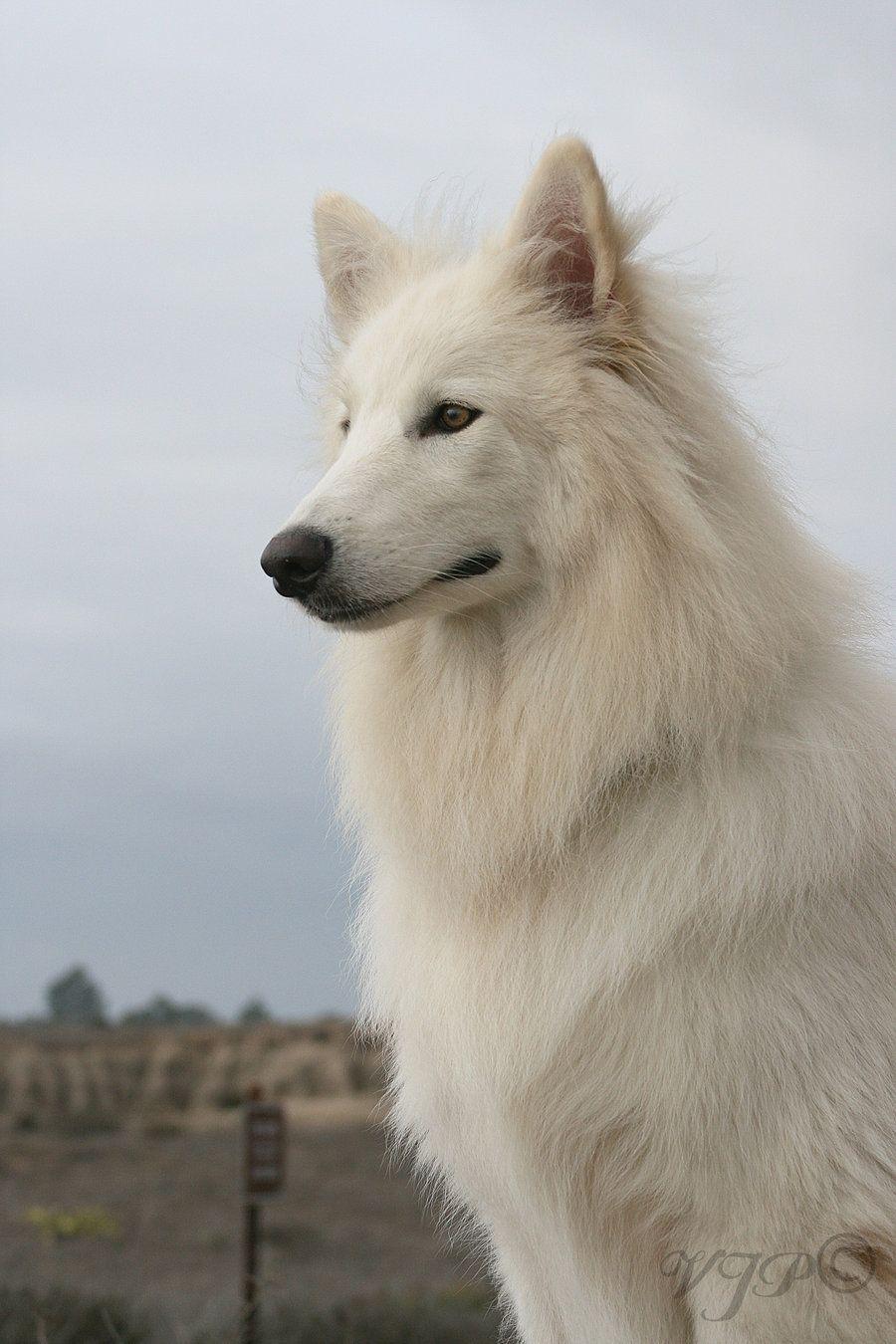 Inner Wolf Pride by shallowxsleep.deviantart.com