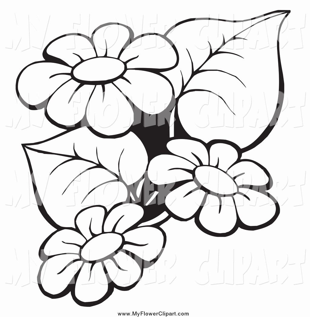 Coloring Flowers Clip Art Fresh Flowers Clip Art Border Black And Whiteimage Gallery Clip Art Borders Flower Sketches Flower Drawing