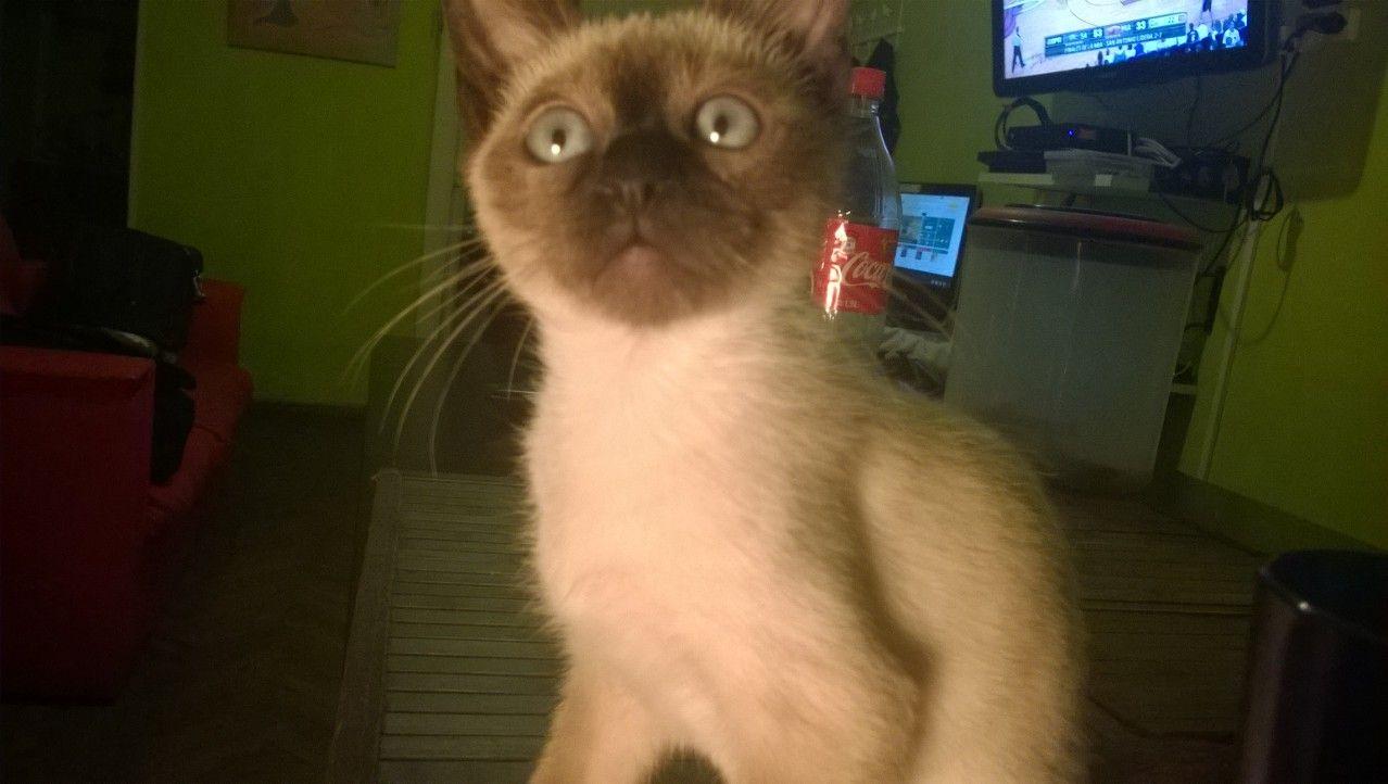 Huguito Bebe Gato Hugor Mi Gato Cat Pinterest Gato Y Bebe # Muebles Huguito