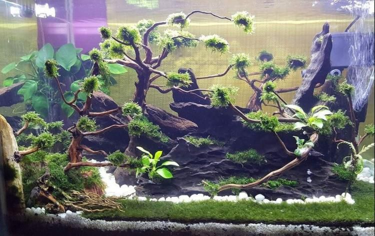 100 Awesome Aquascape Gallery Ideas That You Never Seen Before Aquascape Aquatic Plants Fish Tank