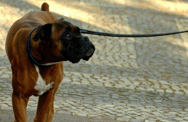Is your dog is walking you instead of the other way around?  Here are six tips that can help.