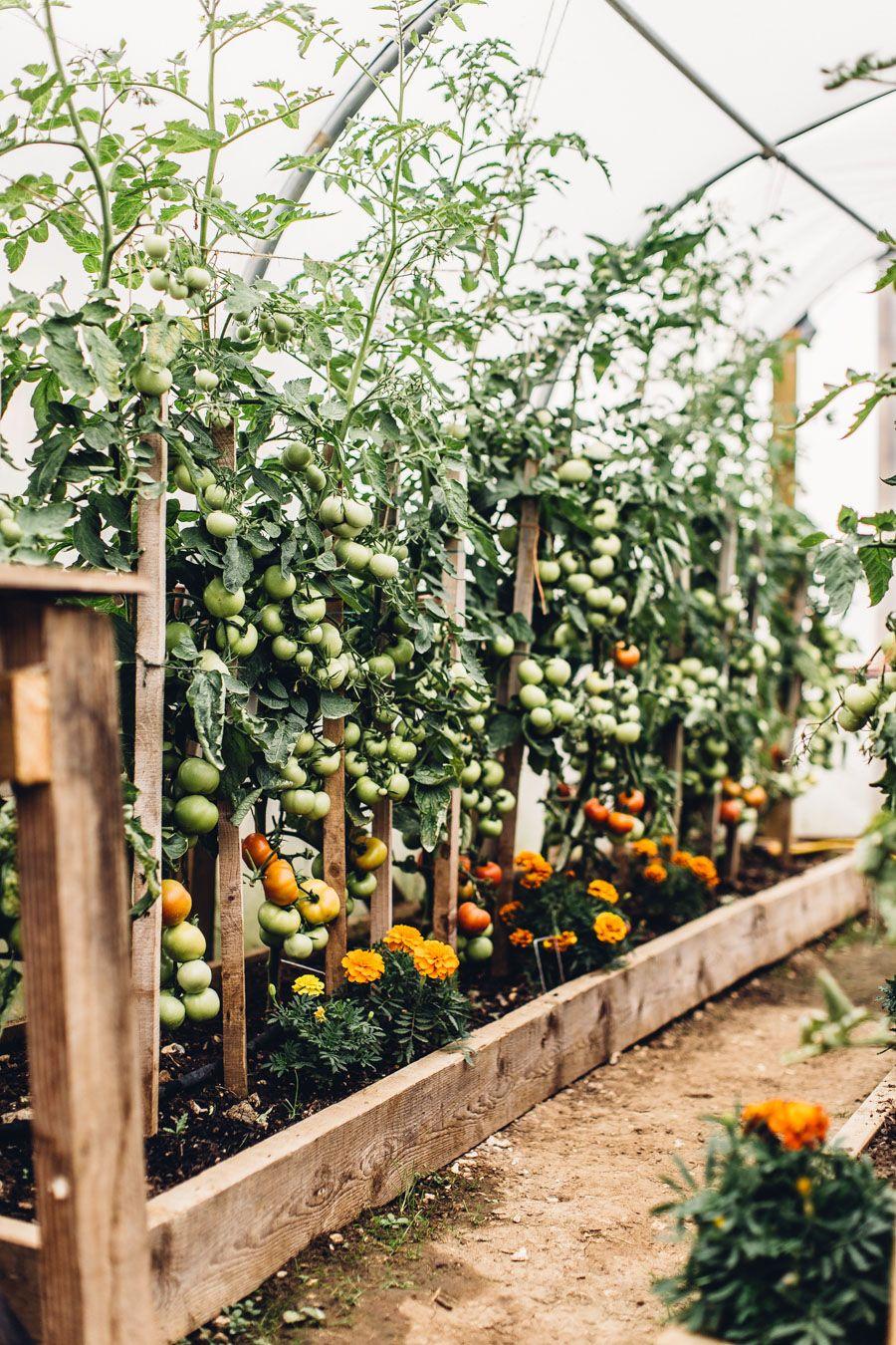 HILL VIEW FARM - CREATIVITY FESTIVAL 2018 | Vegetable ...