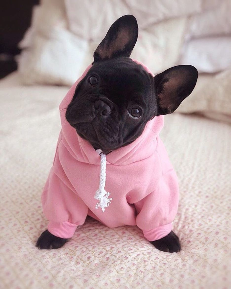 Keep your pet warm, comfy, and cute in the in the Frenchie World® Basic Dog Hoodie in Pink, Red, Purple, Orange, Navy Blue or Brown!
