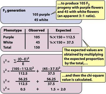 genetics chi square - Google Search | genetics | Pinterest | Chi ...
