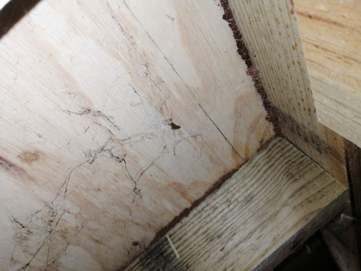 Termites Tracking Over Treated Timber And Through It Treated Timber Timber Timber Structure