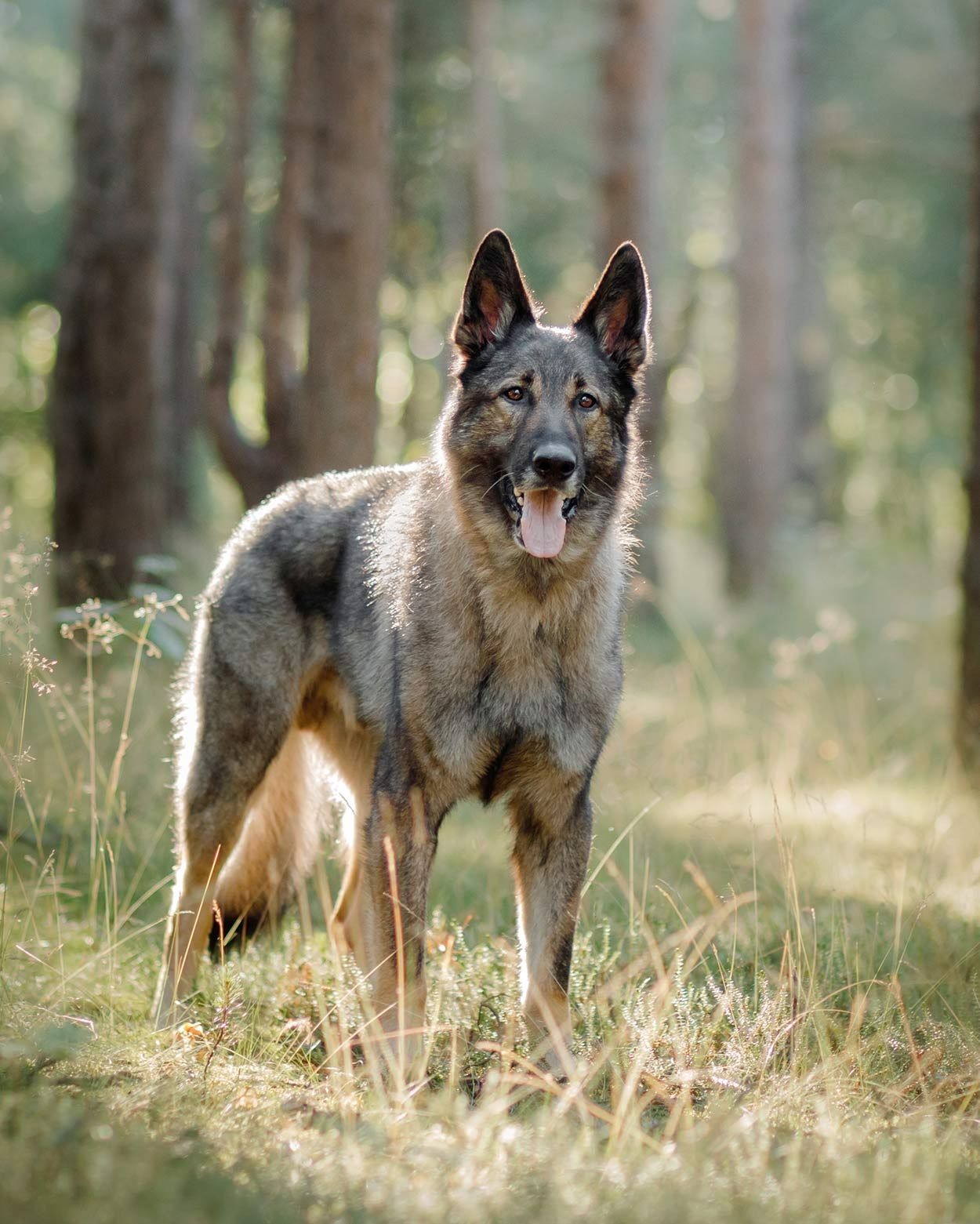 Russian Dog Breeds The Amazing Pups That Came From Russia Russian Dogs Russian Dog Breeds Black Dogs Breeds