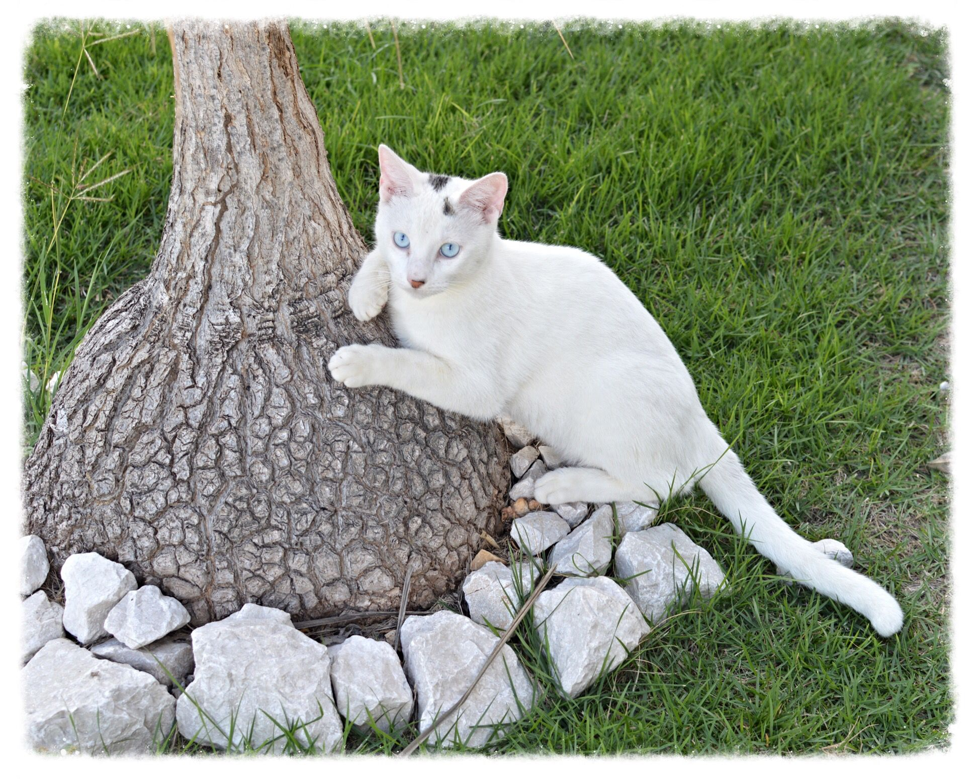 This is Robin's favorite scratching post ( a Ponytail Palm).