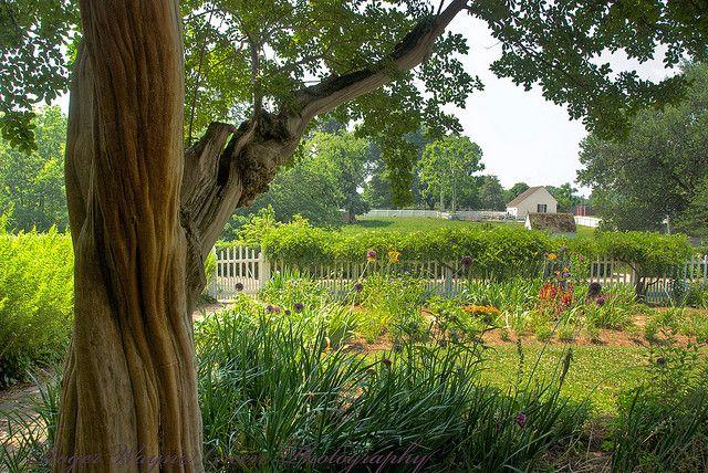 A More Private Colonial Garden