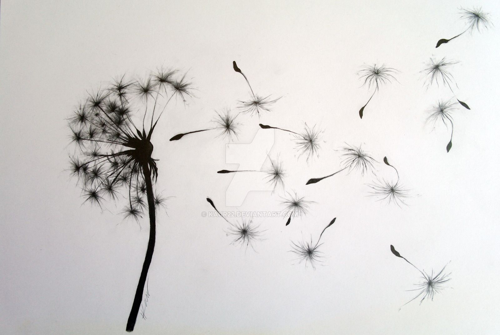 dandelion drawing - Google Search                                                                                                                                                                                 Más