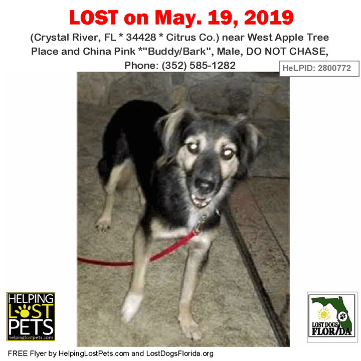 Lost Dog Have You Seen Buddy Lostdog Buddy Bark Crystalriver West Apple Tree Place China Pink Fl 34428 Citrus Co Losing A Dog Dogs Dog Training