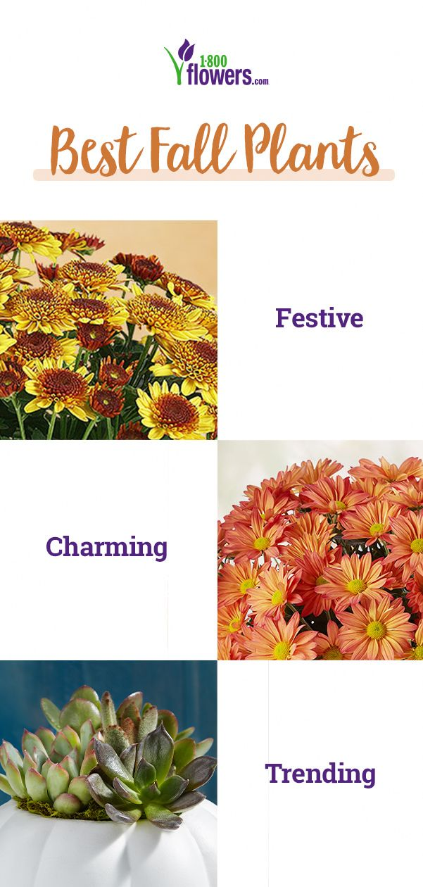 From Fall Potted Plants That Brighten Any Home To Fall Flowering