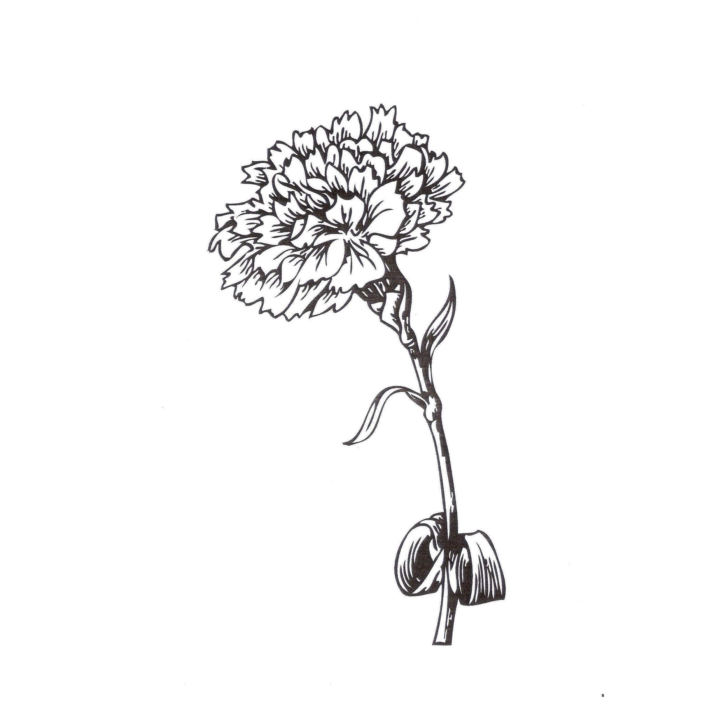 dibujos de clavel para colorear | Tatuajes | Pinterest | Clavel ...