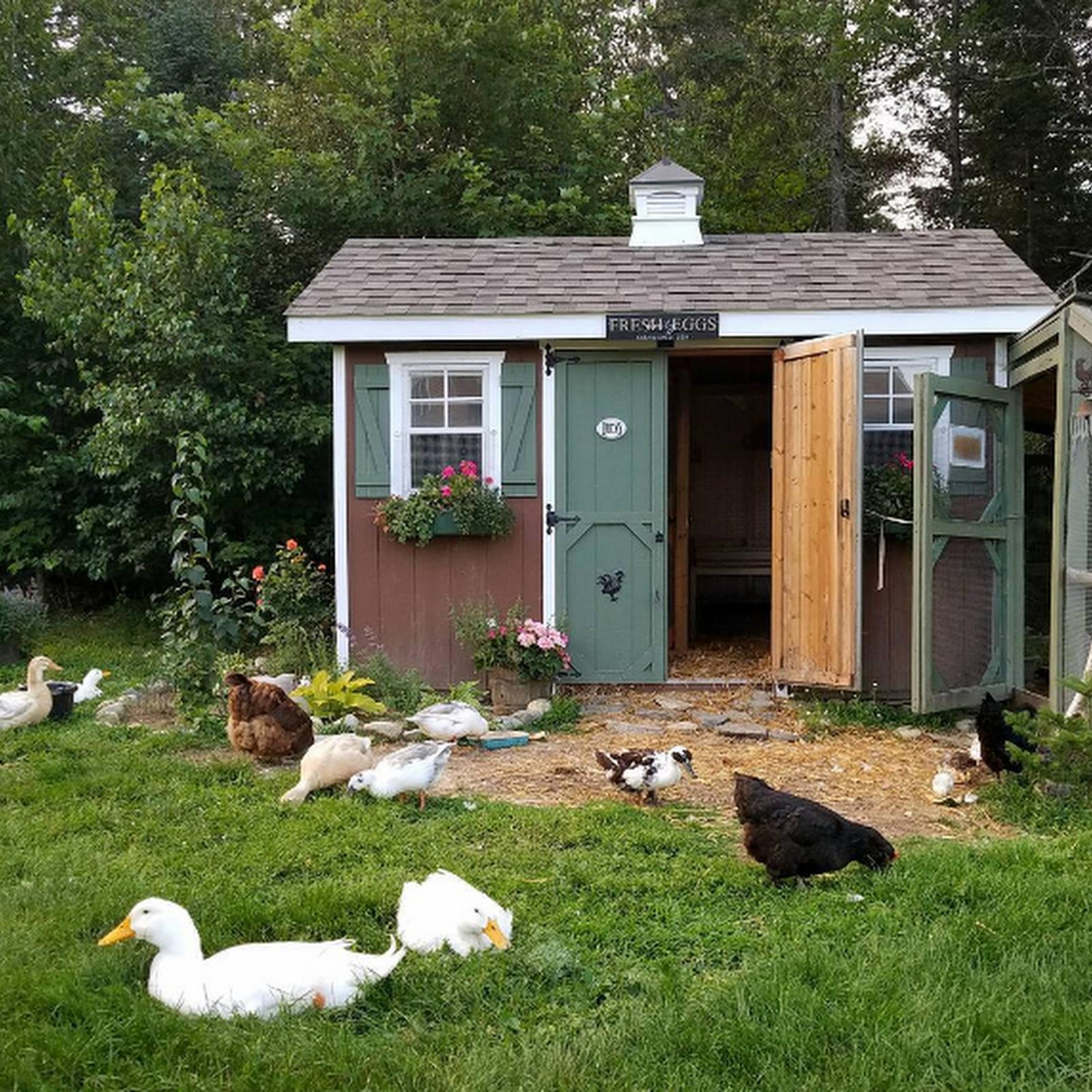 backyard chickenkeeping blog by top selling author lisa steele