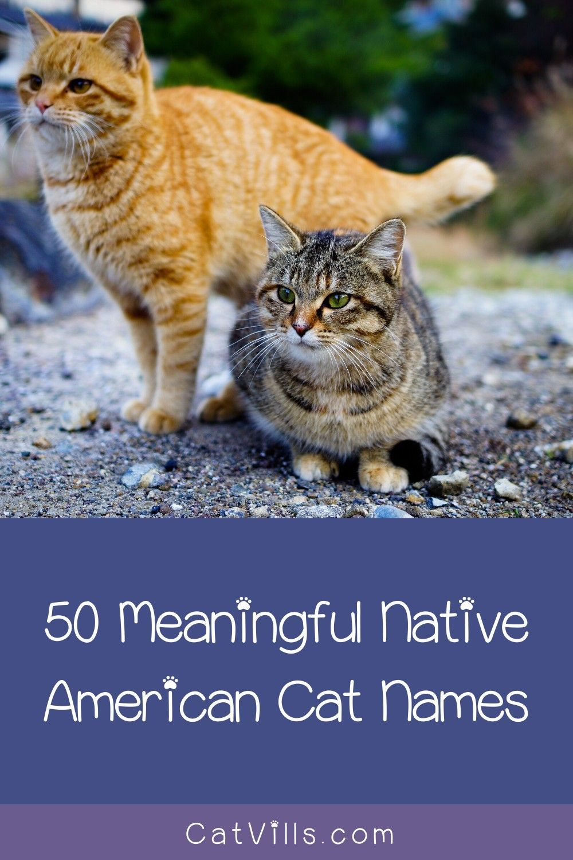 Native American Cat Names