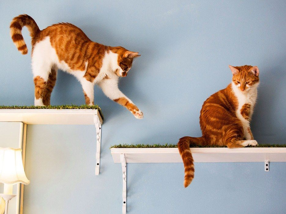 The 14 Best Cat Cafés Around the World Cat cafe, Cat day