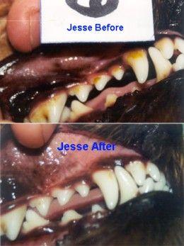 Leba III Review | Dog teeth cleaning, Dog teeth, Teeth ...