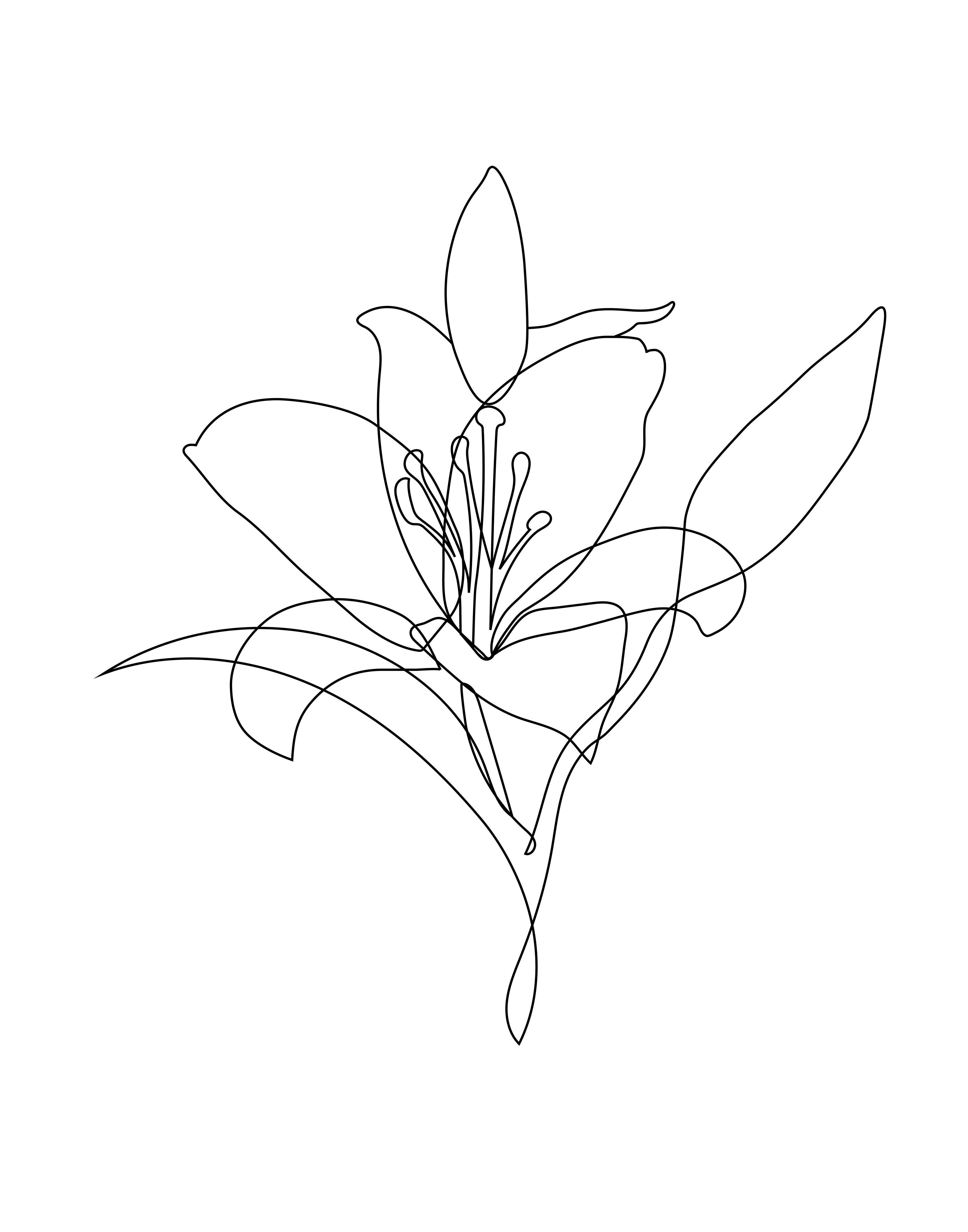 Lily Floral Sketch Clipart Png Digital Design Download Sublimation Graphics Png Continuous Flower Illustration Lalis Arts Line Art Tattoos Line Art Flowers Flower Line Drawings