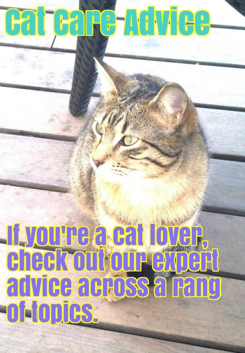 Comprehensive cat care advice cat care cats cat lovers