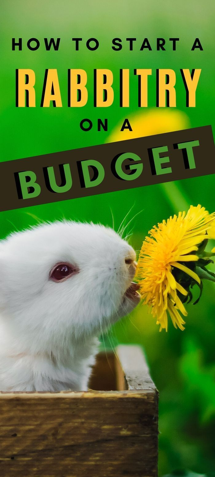 How To Start Your Rabbitry On A Budget in 2020 | Hobby ...