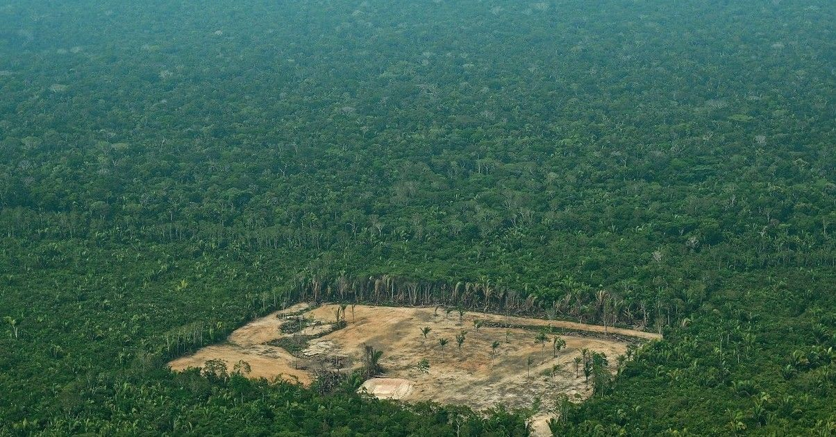 Brazil Says Deforestation In The Amazon Is At Its Worst Level In A