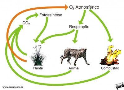 ciclo do oxigenio - Pesquisa Google