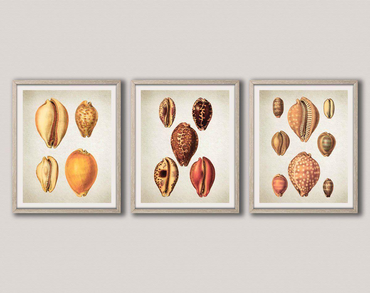 Sea shell decor sea shell wall art sea shell prints set of kitchen