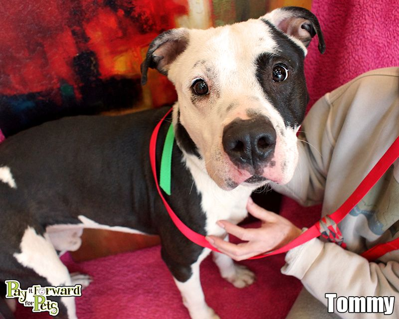 Adopt Tommy On Petfinder I Love Dogs Adoption Family Pet