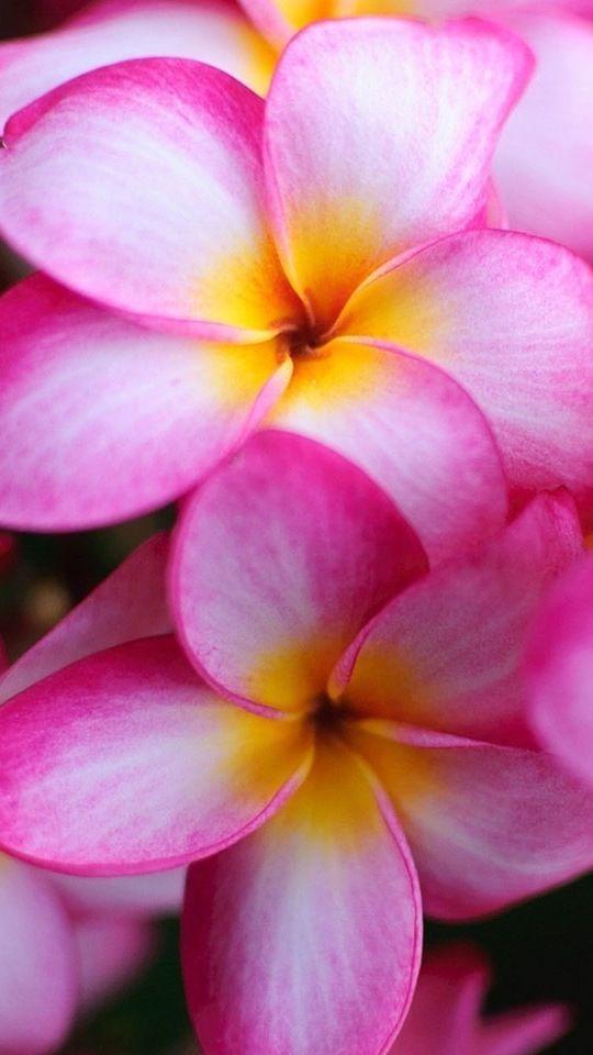 Pin von Silvia Cubas auf Flowers and more | Pinterest | Natur und Backen