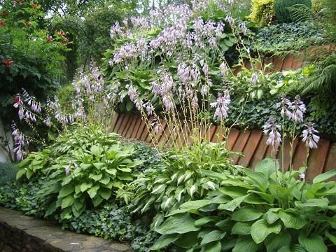 Bilder Von Euren Hanggärten   Seite 1   Gartengestaltung   Mein Schöner  Garten Online