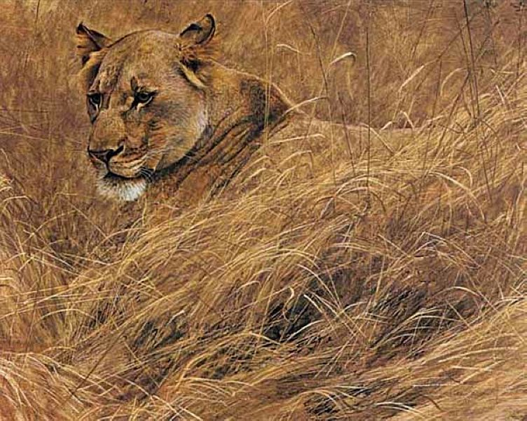 Robert Bateman Paintings, Art Painting, Wild Animals Paintings