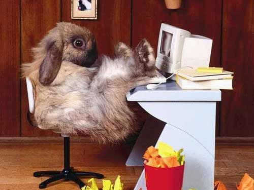 lustige tier bilder 2 kleine pause unterhaltung crazy animals und. Black Bedroom Furniture Sets. Home Design Ideas
