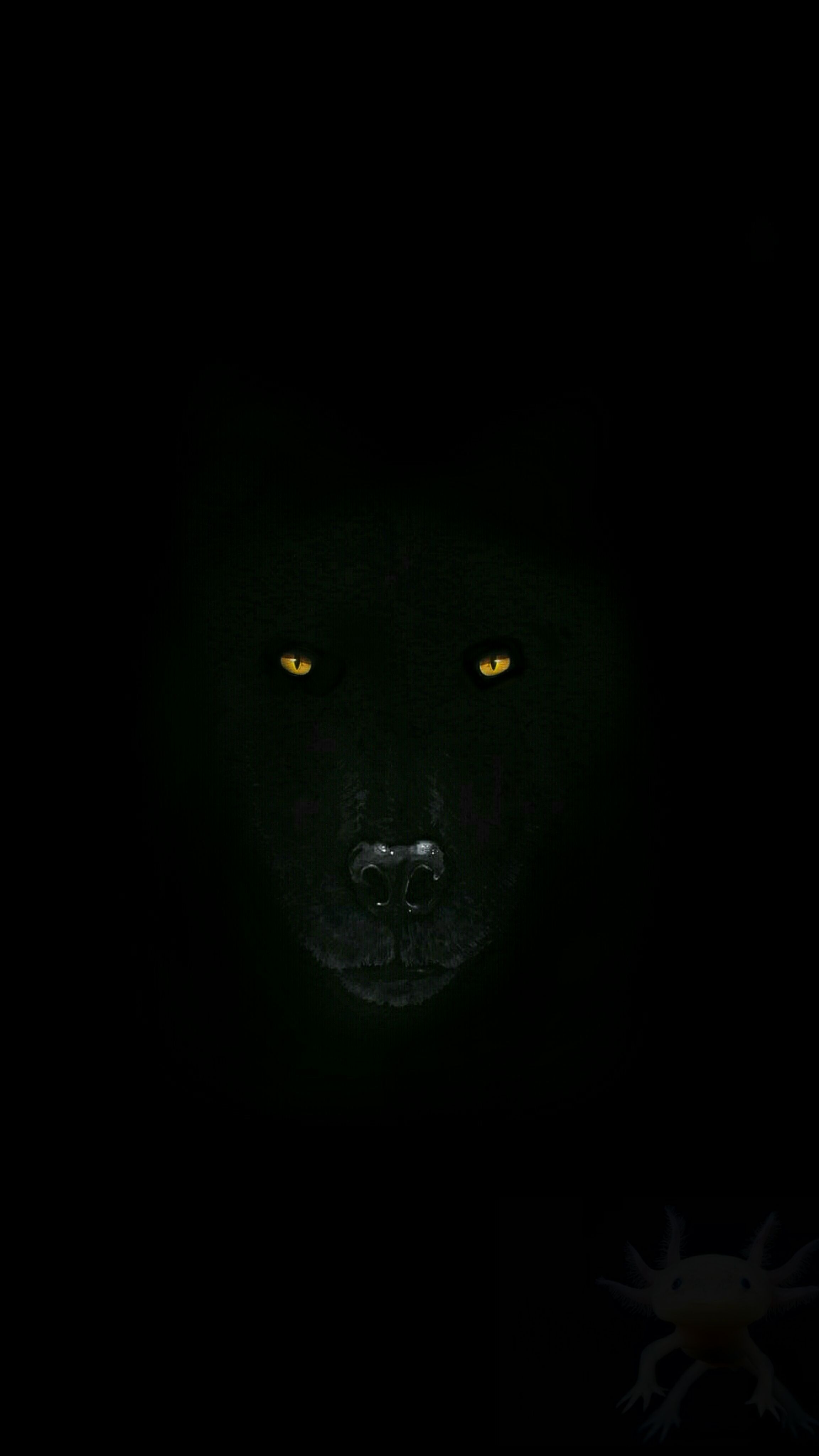 Look At This Wolf Wallpaper I Made Wolf Wallpaper Iphone Wallpaper Wolf Dark Phone Wallpapers