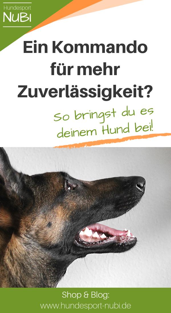 Hund Bleib Beibringen Wieso Ein Auflosekommando Besser Ist Hundesport Nubi Blog Der Hundeblog Fur Aktive Hunde Hunde Hundetraining Und Hundchen Training