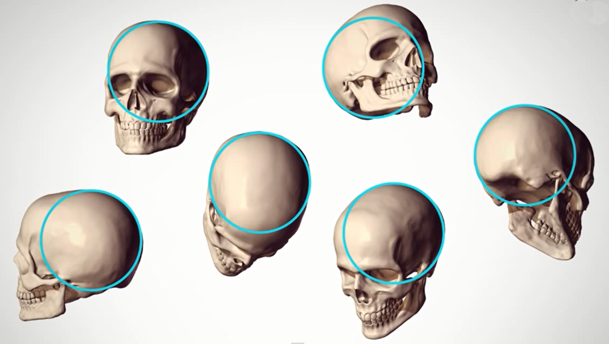 Human Figure Proportions - Cranial Units - Robert Beverly