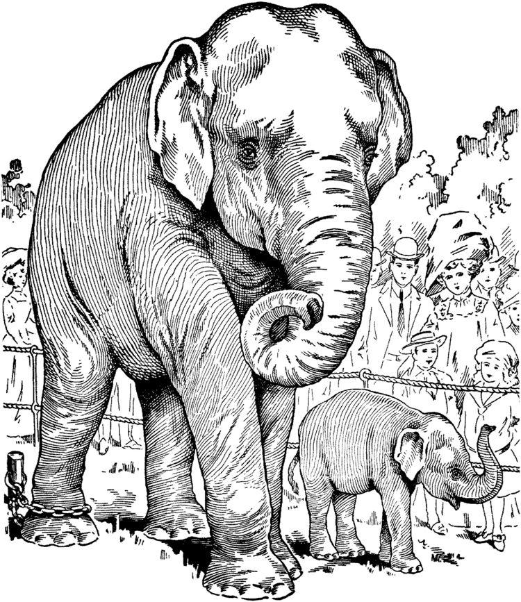 Brandmalerei Vorlage Elefante im Zoo | Basteln mit kindern ...