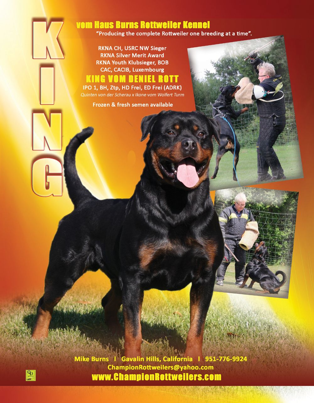 Vom Huas Burns Rottweiler Kennel Producing The Complete Rottweiler