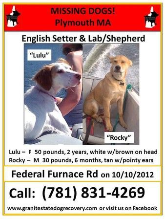 Lulu And Rocky Went Missing From Federal Furnace Road Oct 10 2012 Lulu Is A Two Year Old 50 Pound English Setter M Losing A Pet Losing A Dog American Bull