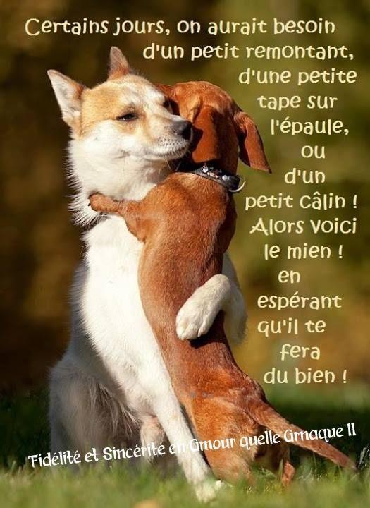 Célèbre Câlins | Citations et Humour | Pinterest | Calin, Epaule et  TT12