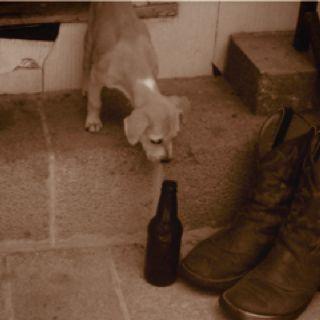Pup and his beer  Haha, brings back memories...  @Ashley