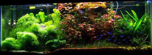 4 Foot 50 Gallon Tropical Community Tank Community Fish Tank Fish Plants Community Tanks
