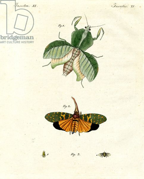 Strange insects (coloured engraving)
