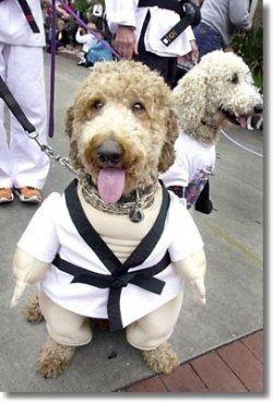 """Martial arts humor facebook """"Dog-Gi"""""""