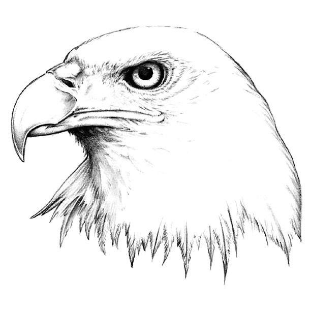 realistic-eagle-head.jpg (610×610) | Eagle drawing, Eagle ...