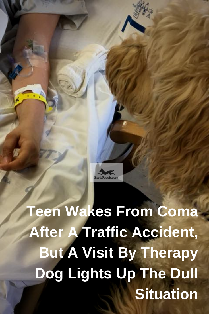 Fergie, the dog, is a regular visitor to hospitals and is